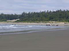 DSsurfingLesson.jpg Landscapes - Nature beach sand coast ocean water british columbia canada photography