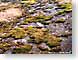 Tazl012Denmark.jpg stones rocks Landscapes - Nature moss