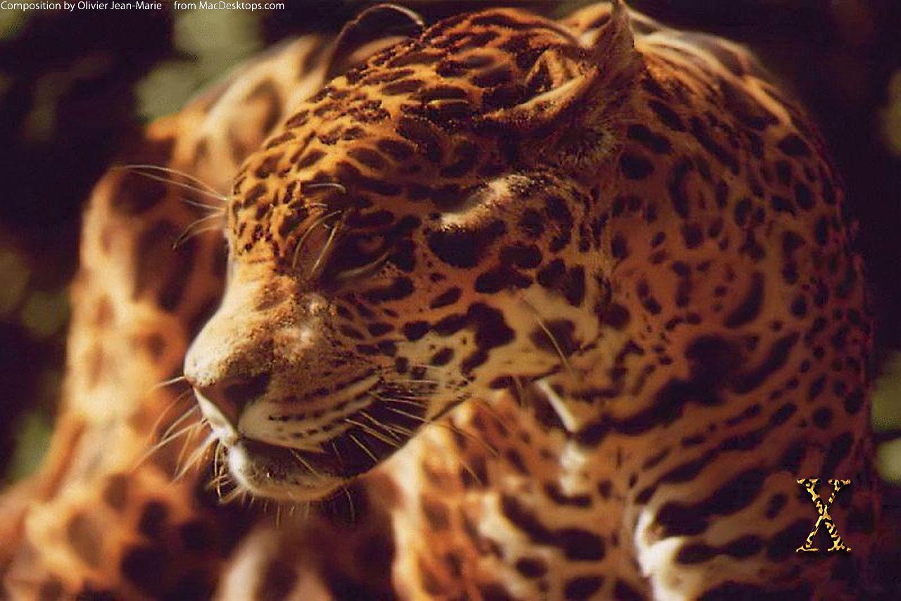 Самые красивые фото животных на аву